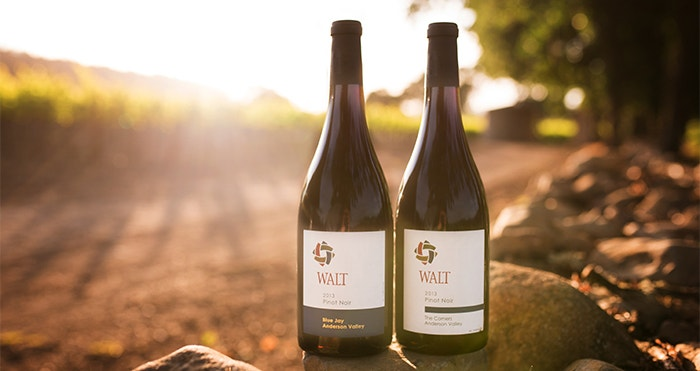 Anderson Valley Pinot Noir from WALT Wines | Shop WALT Wines