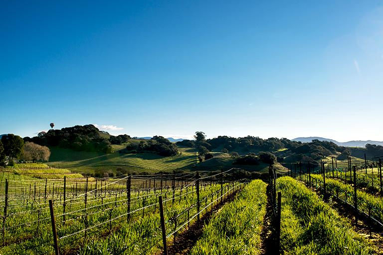 Brown Ranch, Carneros, Napa Valley Vineyard