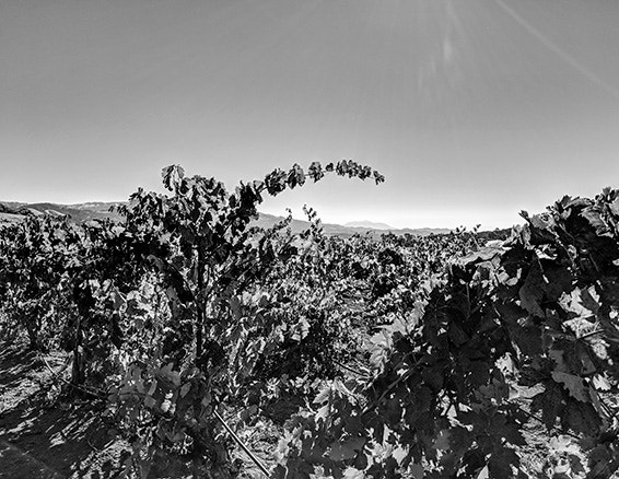 Rockpile is Zinfandel country,