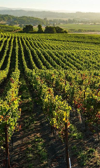 WALT Gap's Crown Vineyard