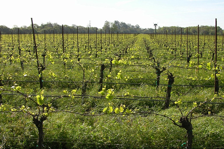 Sonoma Coast Chardonnay's