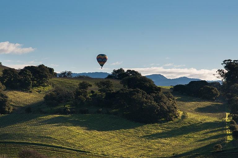 Brown Ranch Vineyard image