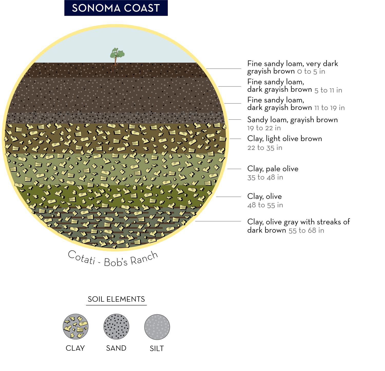 WALT Vineyard Soil Sample | Sonoma, Napa, Healdsburg Wine Tasting | WALT  Wines