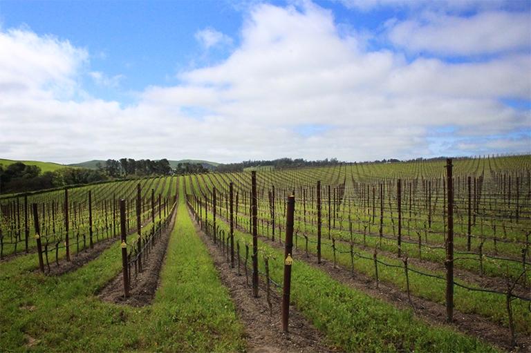 Bob's Ranch Vineyard image