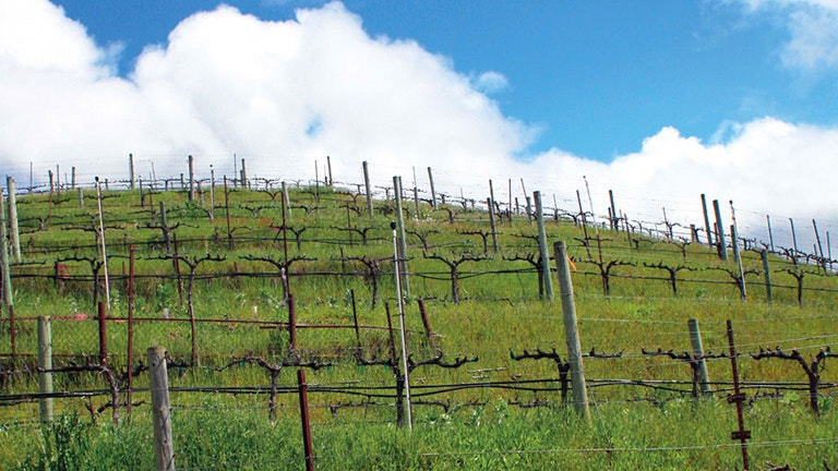 Embeded YouTube Video of Savoy Vineyard in Anderson Valley, Mendocino County
